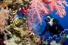 Scuba Diving at Providendcia Island, Colombia.